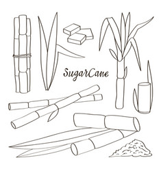Sugar cane icons vector