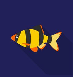 barbus fish icon flat singe aquarium fish icon vector image