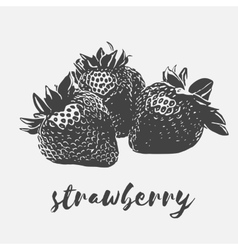 Strawberry organic vegan vector image vector image