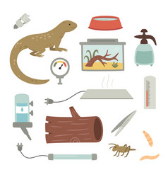 Collection home lizard care items vector