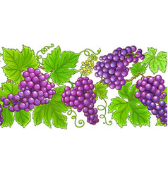 grapes horizontal pattern on white background vector image