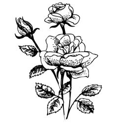 Hand-drawn of rose flowers bouquet vector