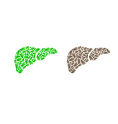 liver silhouette with leaves vector image