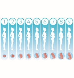 Pregnancy woman stages with vector