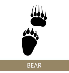 Trace of animal bear vector