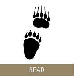 trace of animal bear vector image