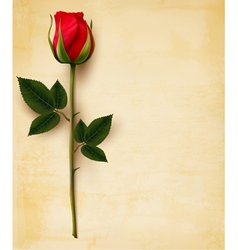 Happy Valentines Day background Single red rose on vector image