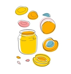 Apricot jam and dried apricots vector