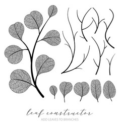 big collection of branch and eucalyptus vector image