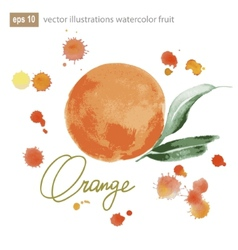 Handmade watercolor orange for retro design vector image