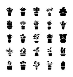 Houseplants glyph icon collection vector