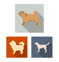 isolated object of cute and puppy symbol set of vector image