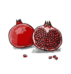 pomegranate sketch for your design vector image