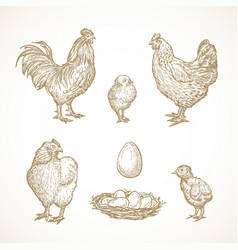poultry birds sketches set hand drawn vector image