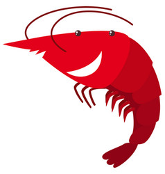 Red shrimp on white background vector