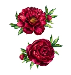 Set of watercolor red peonies bouquets vector