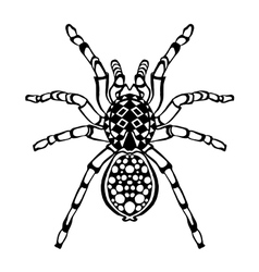 Zentangle stylized spider Sketch for tattoo or t vector