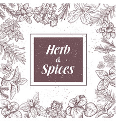 herbs and spices label engraving vector image vector image
