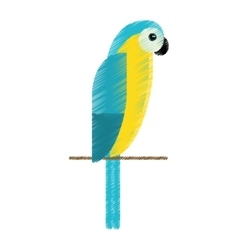 Drawing blue and yellow macaw parrot brazil vector