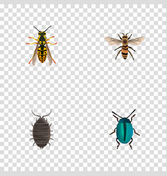Realistic dor bug wasp and other elements vector