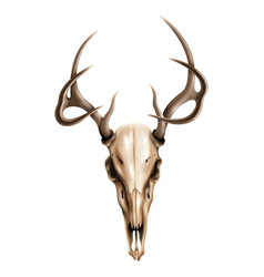 realistic textured deer skull with horns vector image