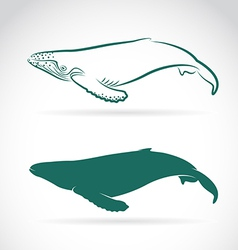 image of whale vector image