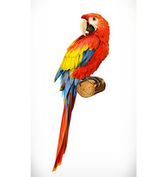 Ara parrot Macaw Photo realistic 3d icon vector