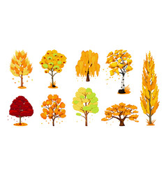 autumn trees set isolated oak birch maple tree vector image