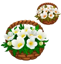 Beautiful bouquet white flowers in straw basket vector