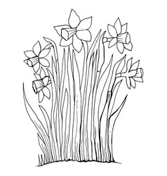 coloring page collection flowers narcissus vector image