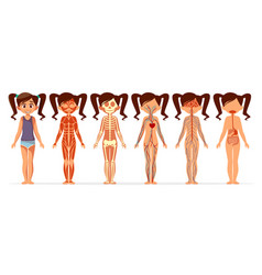 Girl body anatomy cartoon of vector