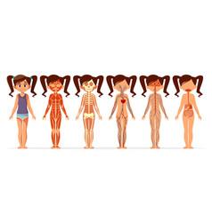 Girl body anatomy cartoon vector