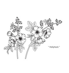 Hollyhock flower drawing vector