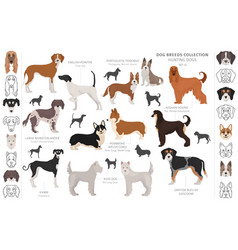 Hunting dogs collection isolated on white clipart vector