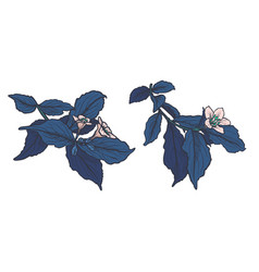Blue leaves and ppink flowers isolated on vector