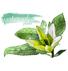 green watercolor flower with leafs vector image
