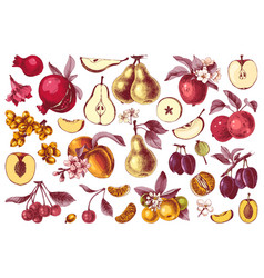 hand drawn colorful fruits collection vector image