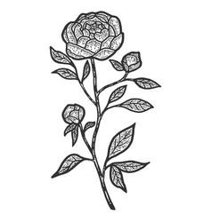 Peony flower sketch scratch board imitation vector