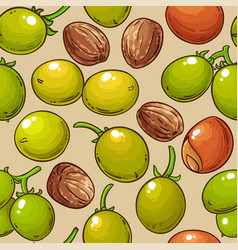 shea nuts pattern on white background vector image