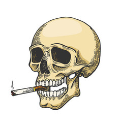 skull smoking color sketch cigarette engraving vector image