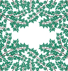 branch with leaves on a white background vector image