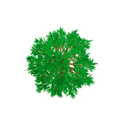 Beech tree isolated on white background 3d vector