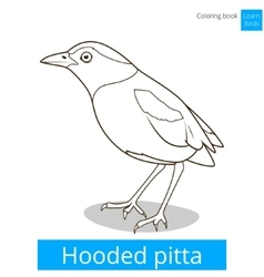 Hooded pitta bird learn birds coloring book vector