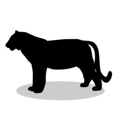 Tiger wildcat black silhouette animal vector