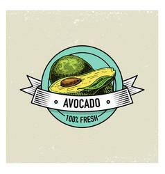 avocado vintage hand drawn fresh fruits vector image
