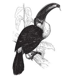 Ariel toucan vintage vector