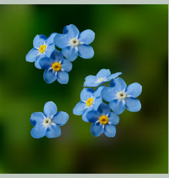 Blue forget me not spring flowers vector