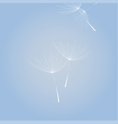 flying dandelion white on blue background blue sky vector image