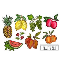hand drawn fruits set vector image