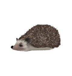 Hedgehog wild northern forest animal vector